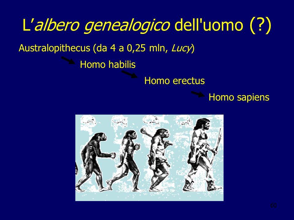 60 Lalbero genealogico dell'uomo (?) Australopithecus (da 4 a 0,25 mln, Lucy) Homo habilis Homo erectus Homo sapiens