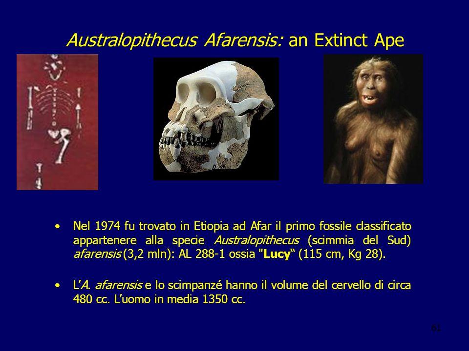 61 Australopithecus Afarensis: an Extinct Ape Nel 1974 fu trovato in Etiopia ad Afar il primo fossile classificato appartenere alla specie Australopit