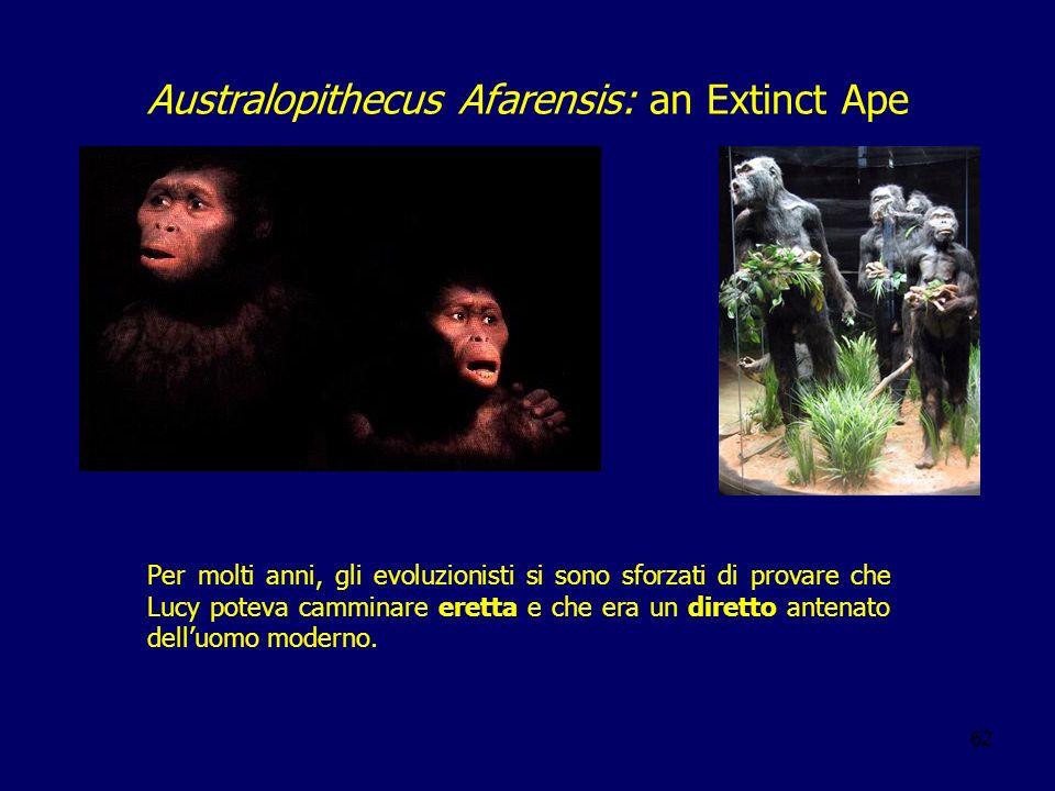 62 Per molti anni, gli evoluzionisti si sono sforzati di provare che Lucy poteva camminare eretta e che era un diretto antenato delluomo moderno. Aust