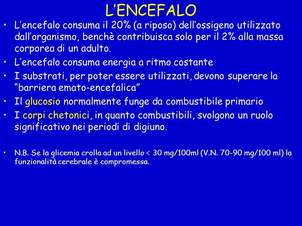 LENCEFALO Lencefalo consuma il 20% (a riposo) dellossigeno utilizzato dallorganismo, benchè contribuisca solo per il 2% alla massa corporea di un adul