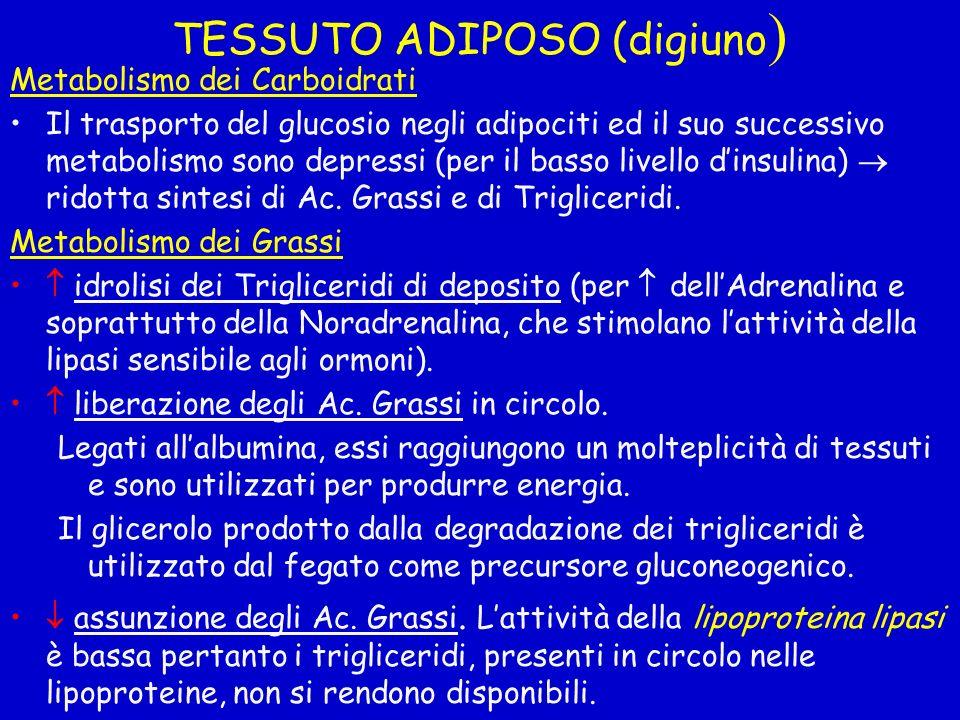 TESSUTO ADIPOSO (digiuno ) Metabolismo dei Carboidrati Il trasporto del glucosio negli adipociti ed il suo successivo metabolismo sono depressi (per i