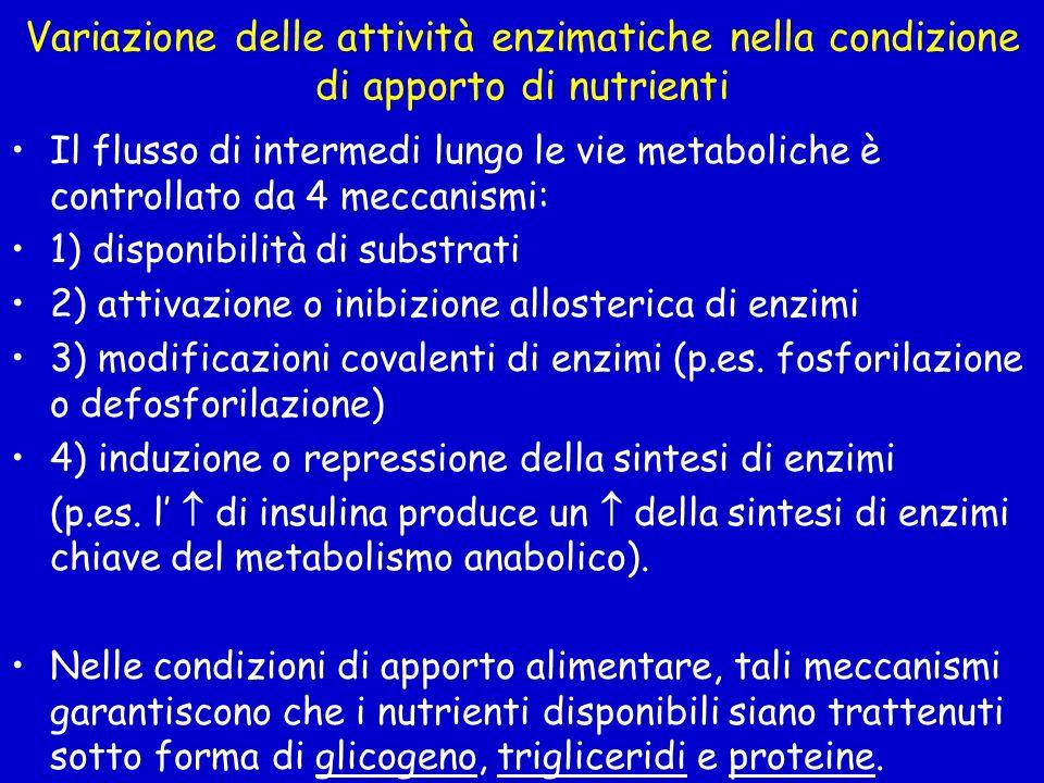 Variazione delle attività enzimatiche nella condizione di apporto di nutrienti Il flusso di intermedi lungo le vie metaboliche è controllato da 4 mecc