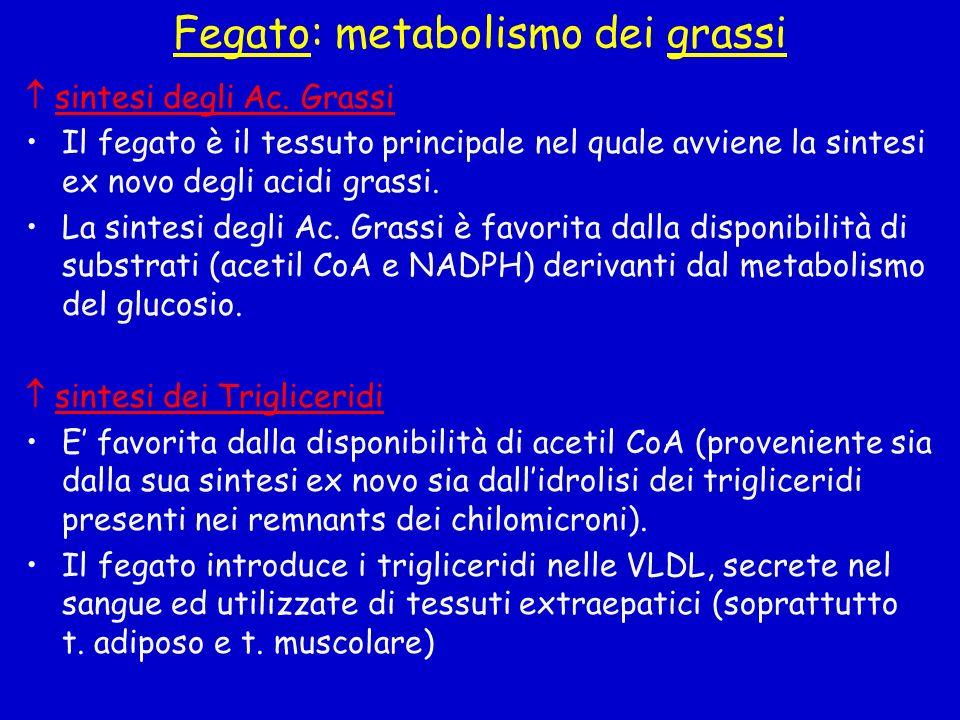 Fegato: metabolismo dei grassi sintesi degli Ac. Grassi Il fegato è il tessuto principale nel quale avviene la sintesi ex novo degli acidi grassi. La