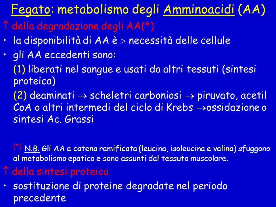 Fegato: metabolismo degli Amminoacidi (AA) della degradazione degli AA(*) la disponibilità di AA è necessità delle cellule gli AA eccedenti sono: (1)