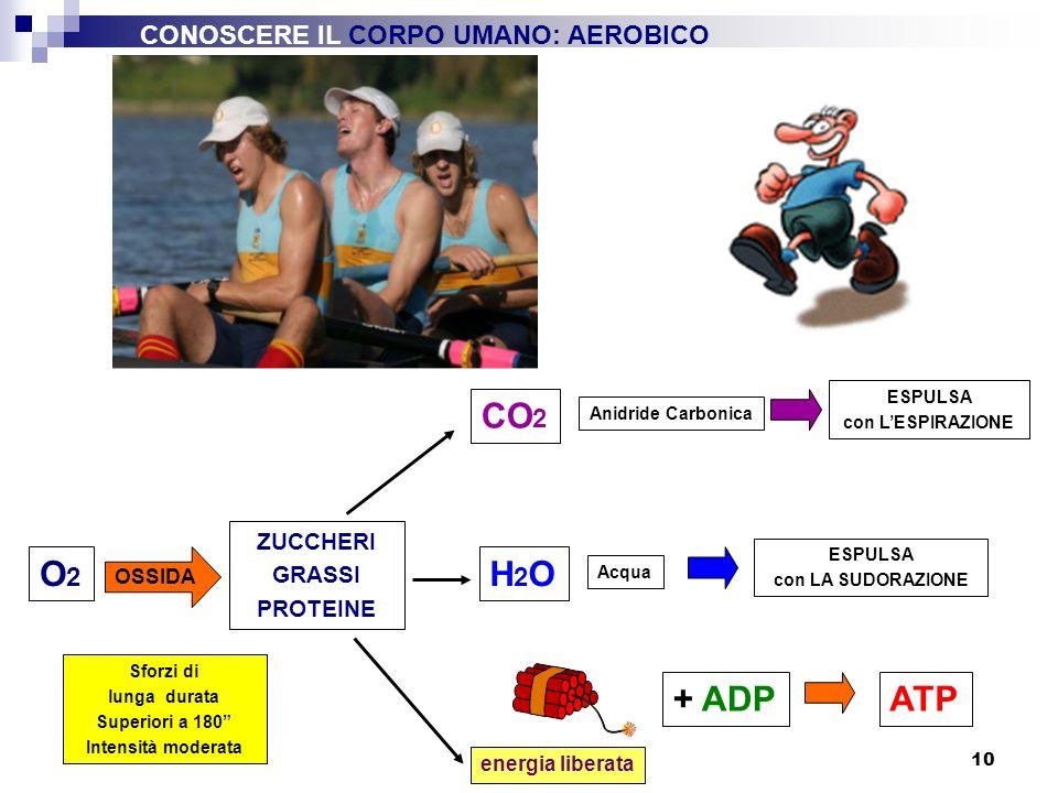 10 O2O2 + ADP energia liberata ATP Sforzi di lunga durata Superiori a 180 Intensità moderata OSSIDA ZUCCHERI GRASSI PROTEINE CO 2 ESPULSA con LESPIRAZ