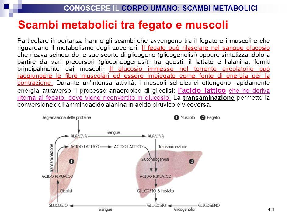 11 Scambi metabolici tra fegato e muscoli Particolare importanza hanno gli scambi che avvengono tra il fegato e i muscoli e che riguardano il metaboli