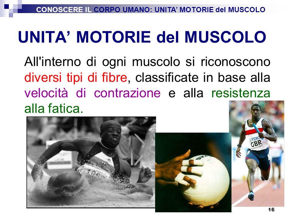 16 UNITA MOTORIE del MUSCOLO All'interno di ogni muscolo si riconoscono diversi tipi di fibre, classificate in base alla velocità di contrazione e all
