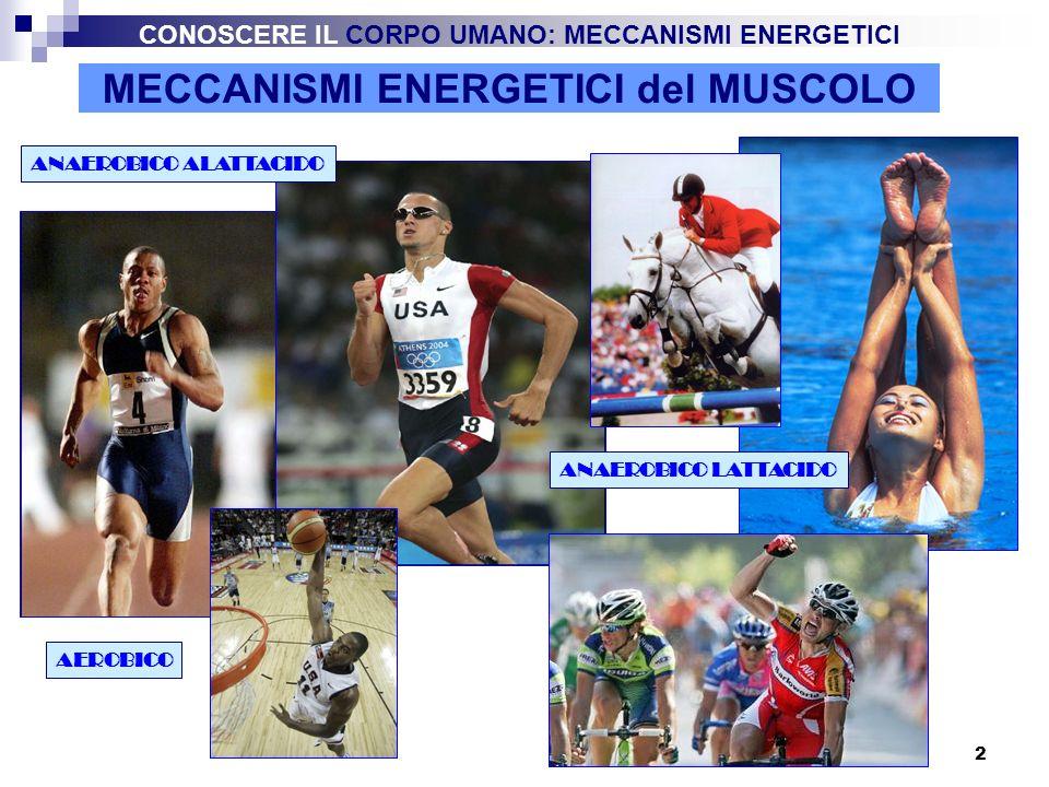 3 MECCANISMI ENERGETICI del MUSCOLO L energia per la contrazione muscolare viene fornita dall ATP (Adenosin trifosfato) che si scinde in ADP (Adenosin-difosfato) e P (fosfato inorganico) ATP = ADP + P + La quantità di ATP presente nei muscoli è molto limitata per cui è necessario ricostituirla in continuazione.
