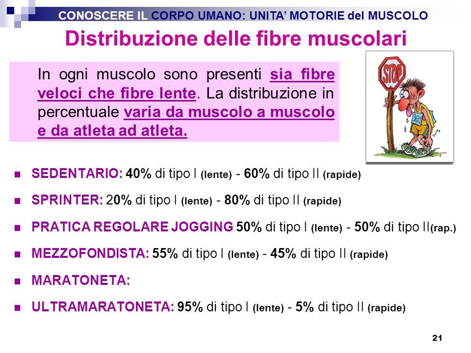 21 Distribuzione delle fibre muscolari SEDENTARIO: 40% di tipo I (lente) - 60% di tipo II (rapide) SPRINTER: 20% di tipo I (lente) - 80% di tipo II (r