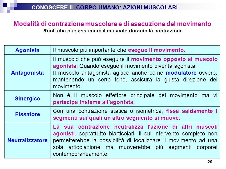 29 Modalità di contrazione muscolare e di esecuzione del movimento Ruoli che può assumere il muscolo durante la contrazione Agonista Il muscolo più im