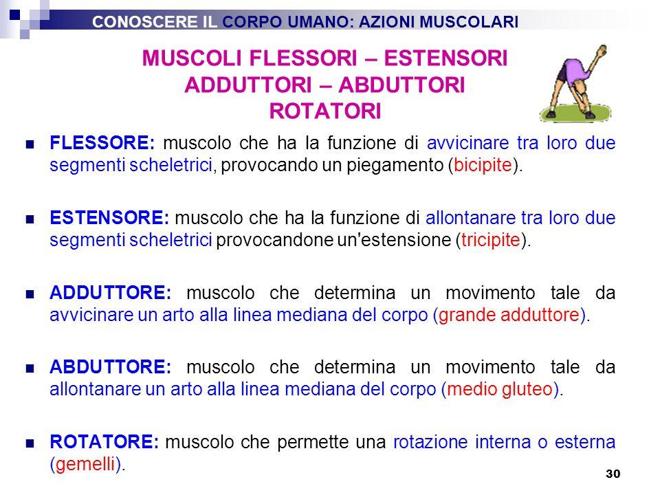 30 FLESSORE: muscolo che ha la funzione di avvicinare tra loro due segmenti scheletrici, provocando un piegamento (bicipite). ESTENSORE: muscolo che h