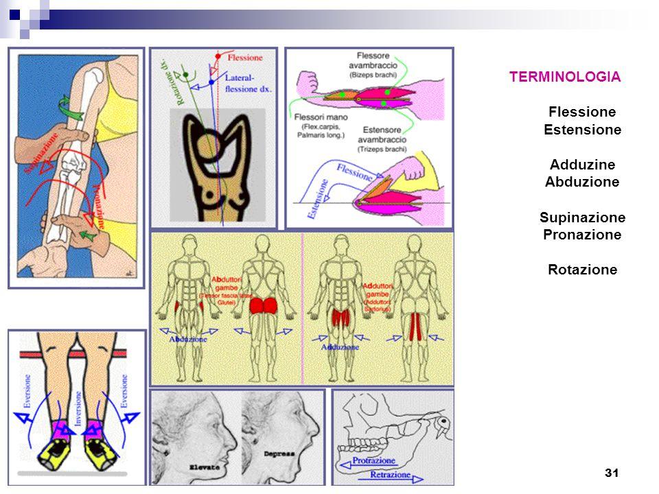 31 TERMINOLOGIA Flessione Estensione Adduzine Abduzione Supinazione Pronazione Rotazione