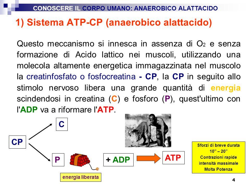 4 1) Sistema ATP-CP (anaerobico alattacido) Questo meccanismo si innesca in assenza di O 2 e senza formazione di Acido lattico nei muscoli, utilizzand