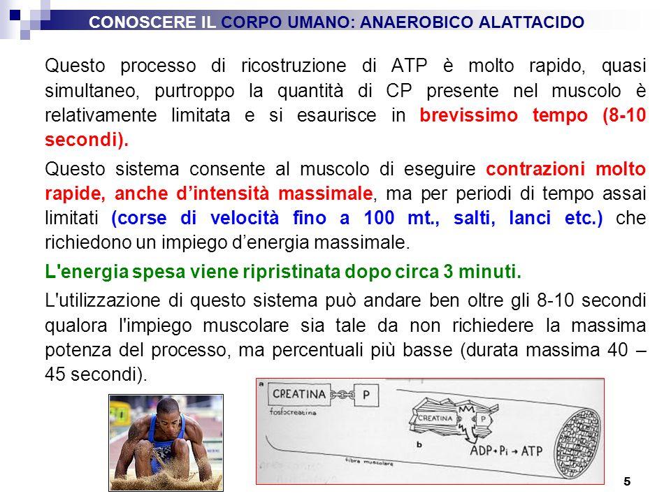 5 Questo processo di ricostruzione di ATP è molto rapido, quasi simultaneo, purtroppo la quantità di CP presente nel muscolo è relativamente limitata