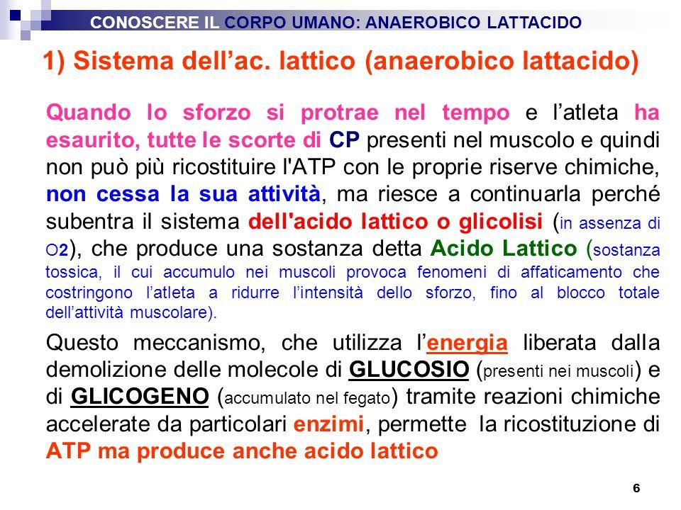 6 1) Sistema dellac. lattico (anaerobico lattacido) Quando lo sforzo si protrae nel tempo e latleta ha esaurito, tutte le scorte di CP presenti nel mu