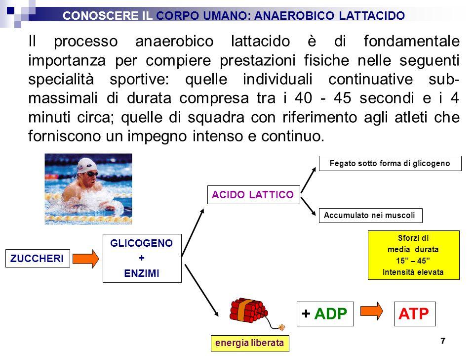 7 ZUCCHERI + ADP energia liberata ATP Sforzi di media durata 15 – 45 Intensità elevata GLICOGENO + ENZIMI ACIDO LATTICO Fegato sotto forma di glicogen