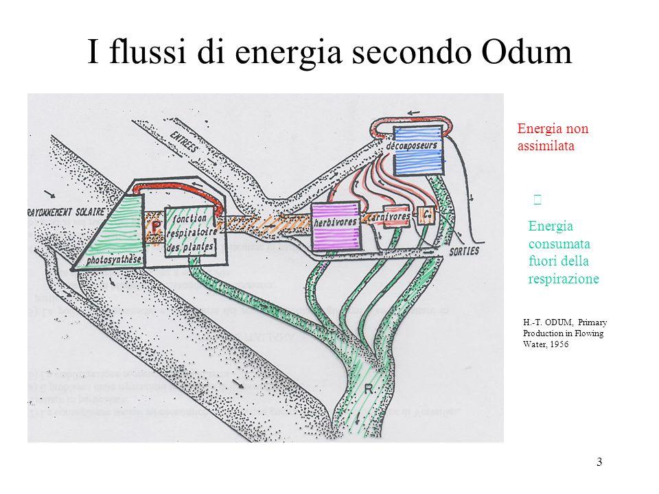 3 I flussi di energia secondo Odum Energia non assimilata Energia consumata fuori della respirazione H.-T. ODUM, Primary Production in Flowing Water,