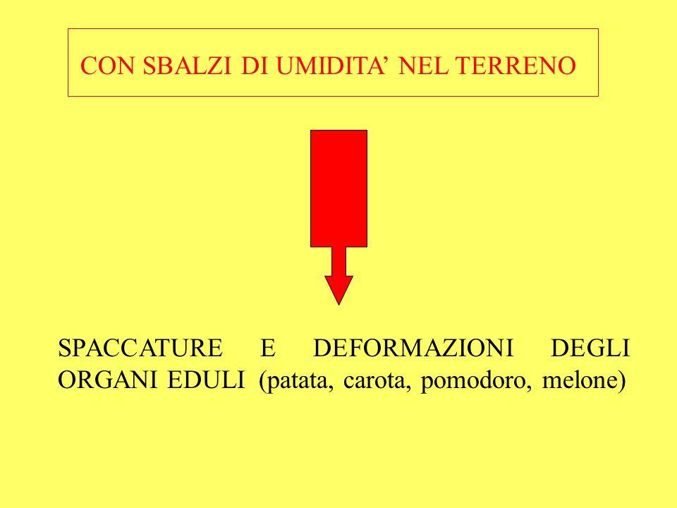 In POMODORO lacqua leggermente salina (4,5 dS/m) per presenza di NaCl provoca: minori rese e frutti più piccoli aumento del contenuto di sostanza secca, zuccheri, acidità, ac.