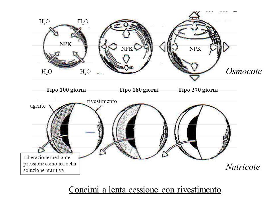 Concimazione di fondo integrata da concimazioni frazionate Fertirrigazione Concimi a lenta cessione Elementi nutritivi intervallo ottimale Periodo di coltura