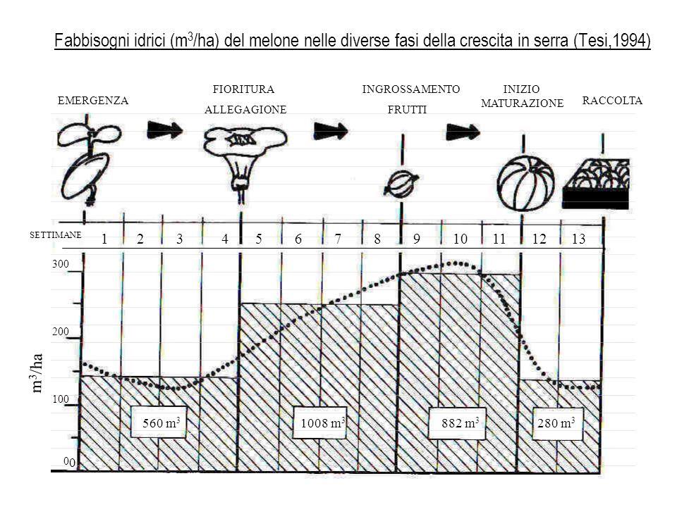 In generale, nellirrigazione delle colture ortive conviene: – ridurre gli apporti idrici nelle prime fasi dopo il trapianto o lemergenza per facilitare lapprofondimento radicale – irrigare a pioggia subito dopo il trapianto o lemergenza (anche a scopo climatizzante) – ridurre o sospendere le irrigazioni in prossimità della raccolta