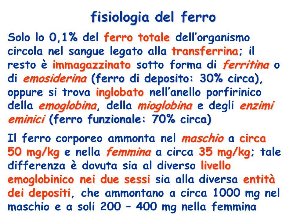 fisiologia del ferro 0,1%ferro totale transferrina immagazzinatoferritina emosiderina (ferro di deposito: 30% circa), inglobato emoglobinamioglobinaenzimi eminici (ferro funzionale: 70% circa) Solo lo 0,1% del ferro totale dellorganismo circola nel sangue legato alla transferrina; il resto è immagazzinato sotto forma di ferritina o di emosiderina (ferro di deposito: 30% circa), oppure si trova inglobato nellanello porfirinico della emoglobina, della mioglobina e degli enzimi eminici (ferro funzionale: 70% circa) maschiocirca 50 mg/kgfemmina35 mg/kg livello emoglobinico nei due sessientità dei depositi Il ferro corporeo ammonta nel maschio a circa 50 mg/kg e nella femmina a circa 35 mg/kg; tale differenza è dovuta sia al diverso livello emoglobinico nei due sessi sia alla diversa entità dei depositi, che ammontano a circa 1000 mg nel maschio e a soli 200 – 400 mg nella femmina