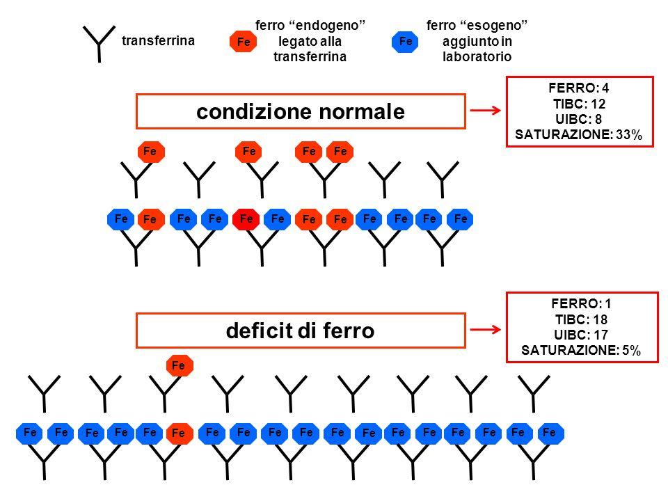 Fe transferrina Fe ferro esogeno aggiunto in laboratorio Fe condizione normale deficit di ferro FERRO: 4 TIBC: 12 UIBC: 8 SATURAZIONE: 33% Fe FERRO: 1 TIBC: 18 UIBC: 17 SATURAZIONE: 5% Fe ferro endogeno legato alla transferrina Fe