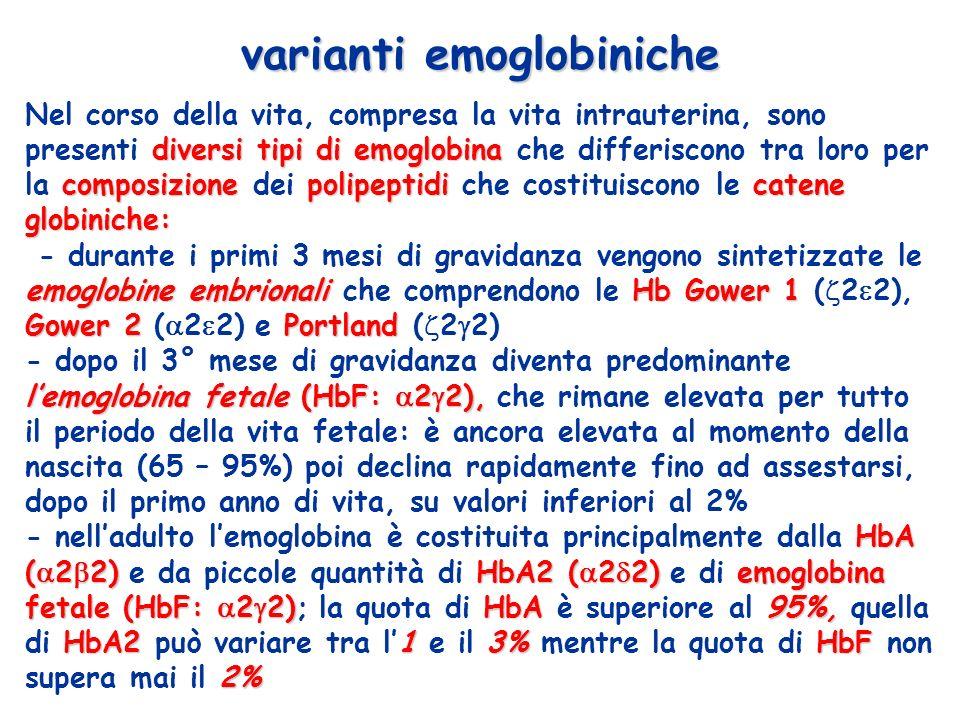 diversi tipi di emoglobina composizionepolipeptidicatene globiniche: Nel corso della vita, compresa la vita intrauterina, sono presenti diversi tipi di emoglobina che differiscono tra loro per la composizione dei polipeptidi che costituiscono le catene globiniche: emoglobine embrionali Hb Gower 1 Gower 2Portland - durante i primi 3 mesi di gravidanza vengono sintetizzate le emoglobine embrionali che comprendono le Hb Gower 1 ( 2 2), Gower 2 ( 2 2) e Portland ( 2 2) lemoglobina fetale (HbF: 2 2), - dopo il 3° mese di gravidanza diventa predominante lemoglobina fetale (HbF: 2 2), che rimane elevata per tutto il periodo della vita fetale: è ancora elevata al momento della nascita (65 – 95%) poi declina rapidamente fino ad assestarsi, dopo il primo anno di vita, su valori inferiori al 2% HbA ( 2 2) HbA2( 2 2)emoglobina fetale(HbF: 2 2)HbA95%, HbA2 13%HbF 2% - nelladulto lemoglobina è costituita principalmente dalla HbA ( 2 2) e da piccole quantità di HbA2 ( 2 2) e di emoglobina fetale (HbF: 2 2); la quota di HbA è superiore al 95%, quella di HbA2 può variare tra l1 e il 3% mentre la quota di HbF non supera mai il 2% varianti emoglobiniche