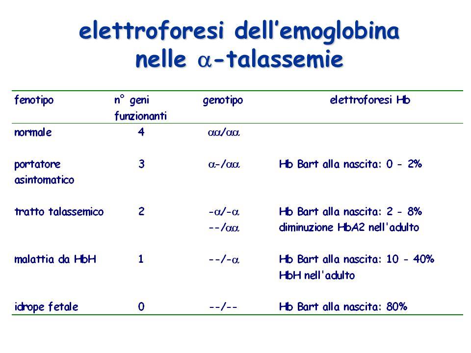 elettroforesi dellemoglobina nelle -talassemie