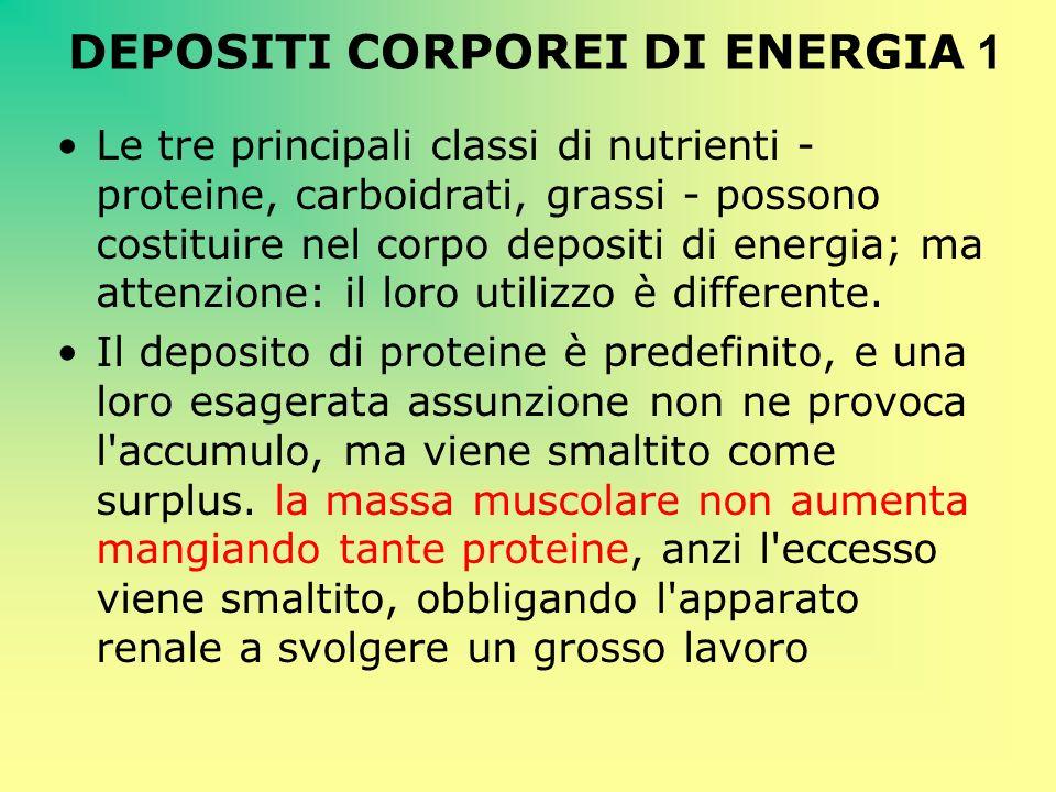 DEPOSITI CORPOREI DI ENERGIA 1 Le tre principali classi di nutrienti - proteine, carboidrati, grassi - possono costituire nel corpo depositi di energi