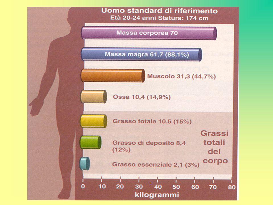 A parità di peso i grassi contengono più del doppio dell energia contenuta nelle proteine e nei carboidrati