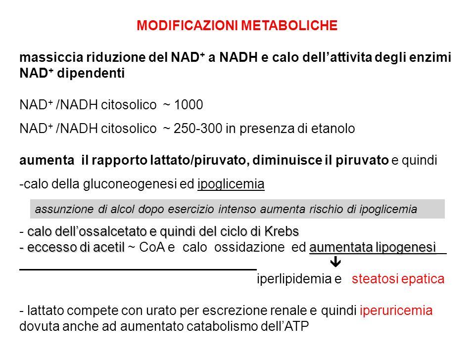 MODIFICAZIONI METABOLICHE massiccia riduzione del NAD + a NADH e calo dellattivita degli enzimi NAD + dipendenti NAD + /NADH citosolico ~ 1000 NAD + /