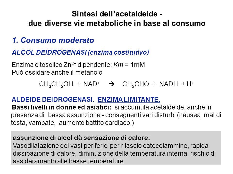 Sintesi dellacetaldeide - due diverse vie metaboliche in base al consumo 1. Consumo moderato ALCOL DEIDROGENASI (enzima costitutivo) Enzima citosolico