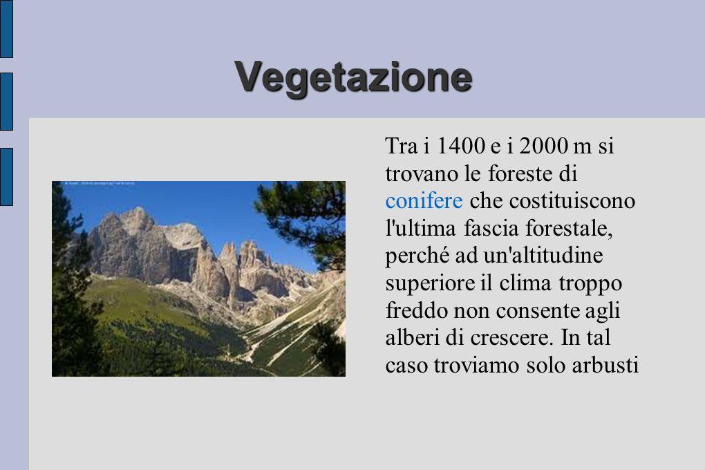 Vegetazione Tra i 1400 e i 2000 m si trovano le foreste di conifere che costituiscono l ultima fascia forestale, perché ad un altitudine superiore il clima troppo freddo non consente agli alberi di crescere.