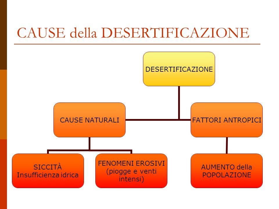 CAUSE della DESERTIFICAZIONE DESERTIFICAZIONE CAUSE NATURALI SICCITÀ Insufficienza idrica FENOMENI EROSIVI (piogge e venti intensi) FATTORI ANTROPICI