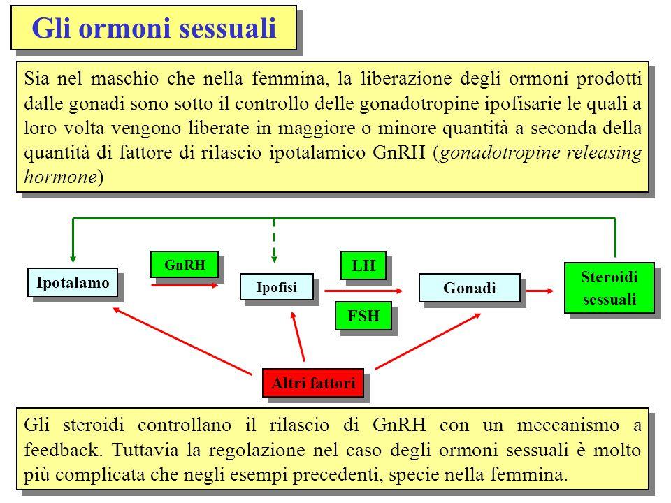Gli ormoni sessuali Sia nel maschio che nella femmina, la liberazione degli ormoni prodotti dalle gonadi sono sotto il controllo delle gonadotropine i