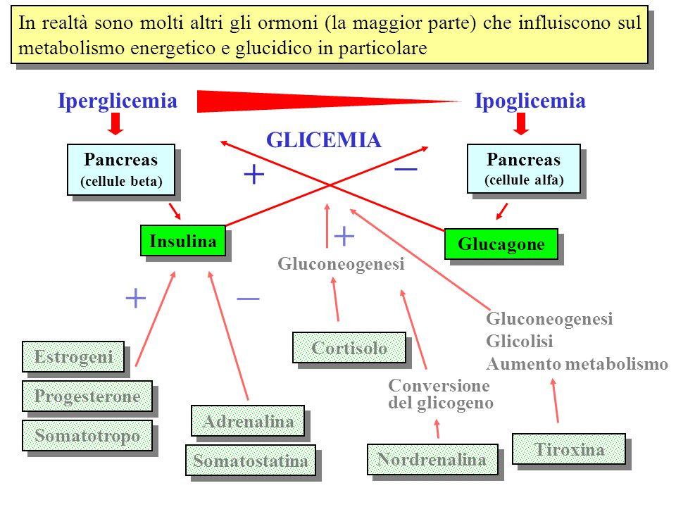 In realtà sono molti altri gli ormoni (la maggior parte) che influiscono sul metabolismo energetico e glucidico in particolare Pancreas (cellule beta)