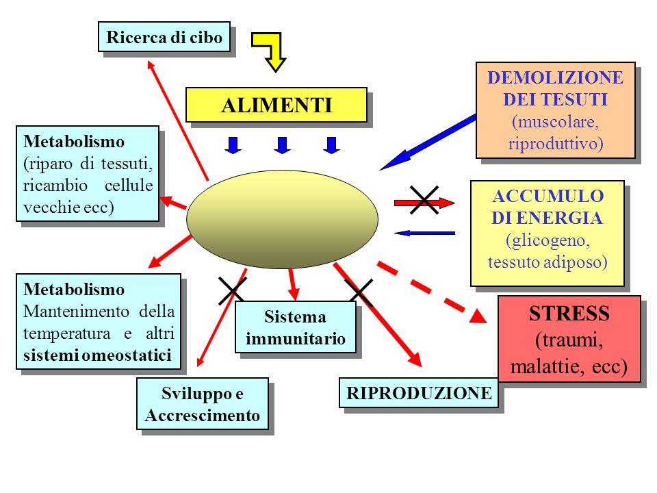 Metabolismo (riparo di tessuti, ricambio cellule vecchie ecc) ALIMENTI Metabolismo Mantenimento della temperatura e altri sistemi omeostatici Sviluppo