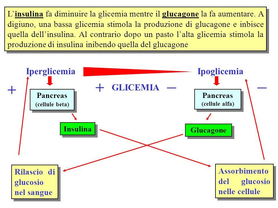 Linsulina fa diminuire la glicemia mentre il glucagone la fa aumentare. A digiuno, una bassa glicemia stimola la produzione di glucagone e inbisce que