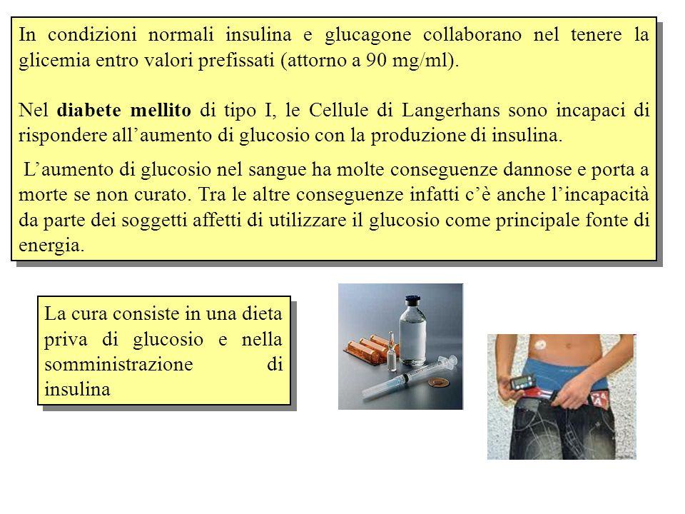 In condizioni normali insulina e glucagone collaborano nel tenere la glicemia entro valori prefissati (attorno a 90 mg/ml). Nel diabete mellito di tip