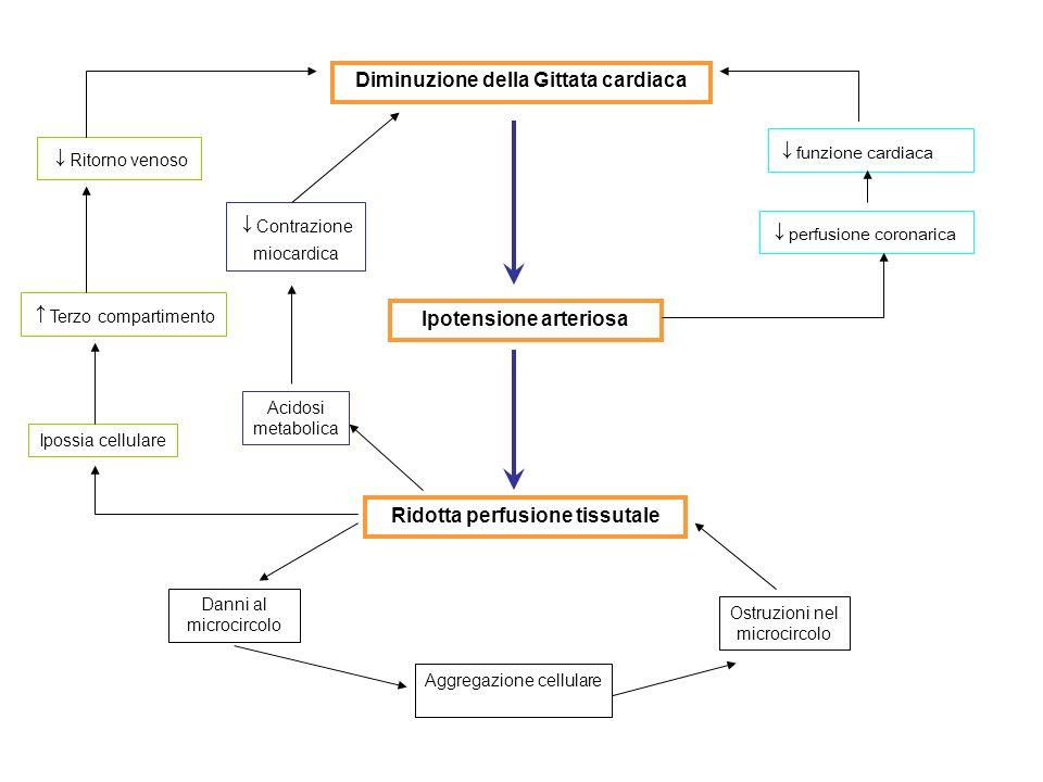 Ipotensione arteriosa Ridotta perfusione tissutale Aggregazione cellulare Ostruzioni nel microcircolo Danni al microcircolo Acidosi metabolica Contraz