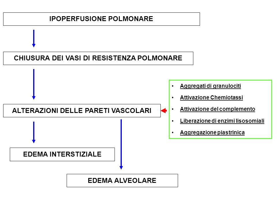 IPOPERFUSIONE POLMONARE CHIUSURA DEI VASI DI RESISTENZA POLMONARE ALTERAZIONI DELLE PARETI VASCOLARI Aggregati di granulociti Attivazione Chemiotassi