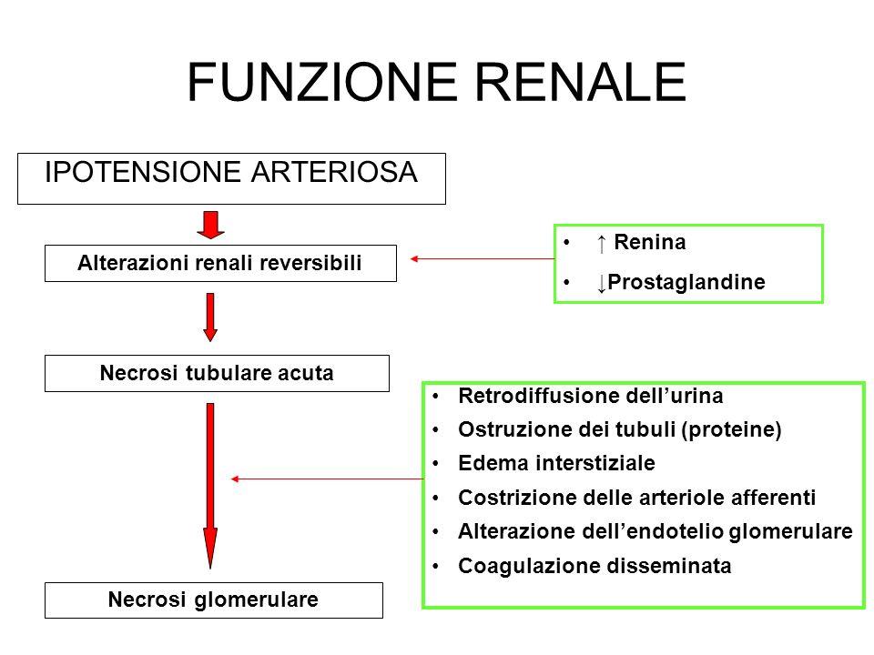 FUNZIONE RENALE IPOTENSIONE ARTERIOSA Alterazioni renali reversibili Necrosi tubulare acuta Necrosi glomerulare Retrodiffusione dellurina Ostruzione d