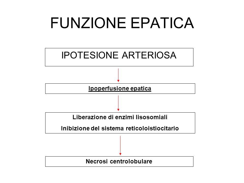 FUNZIONE EPATICA IPOTESIONE ARTERIOSA Ipoperfusione epatica Liberazione di enzimi lisosomiali Inibizione del sistema reticoloistiocitario Necrosi cent