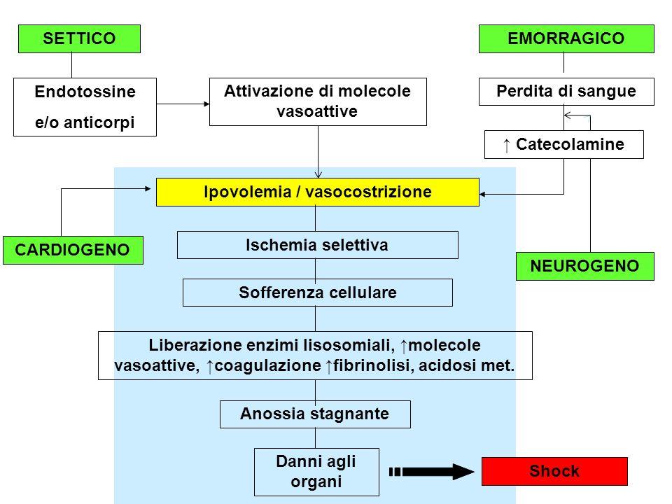 SETTICOEMORRAGICO Endotossine e/o anticorpi Perdita di sangueAttivazione di molecole vasoattive Ipovolemia / vasocostrizione Ischemia selettiva Soffer