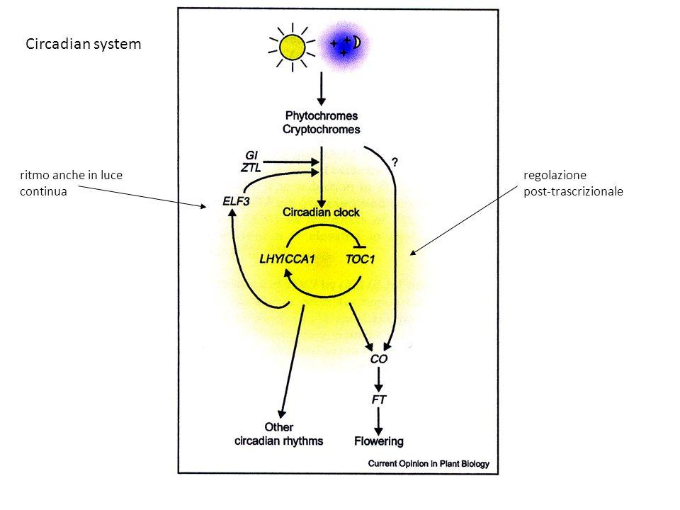 Circadian system regolazione post-trascrizionale ritmo anche in luce continua