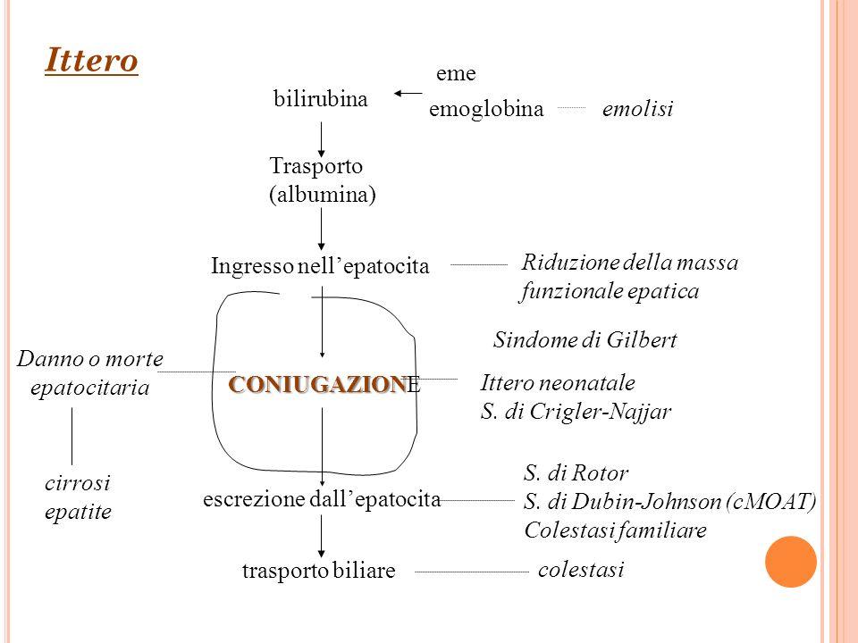 bilirubina emoglobina Trasporto (albumina) Ingresso nellepatocita CONIUGAZION CONIUGAZIONE escrezione dallepatocita trasporto biliare emolisi Sindome