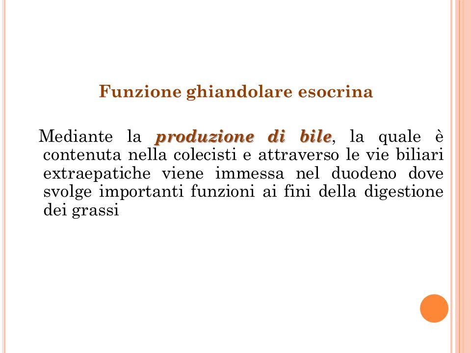 Funzione ghiandolare esocrina produzione di bile Mediante la produzione di bile, la quale è contenuta nella colecisti e attraverso le vie biliari extr