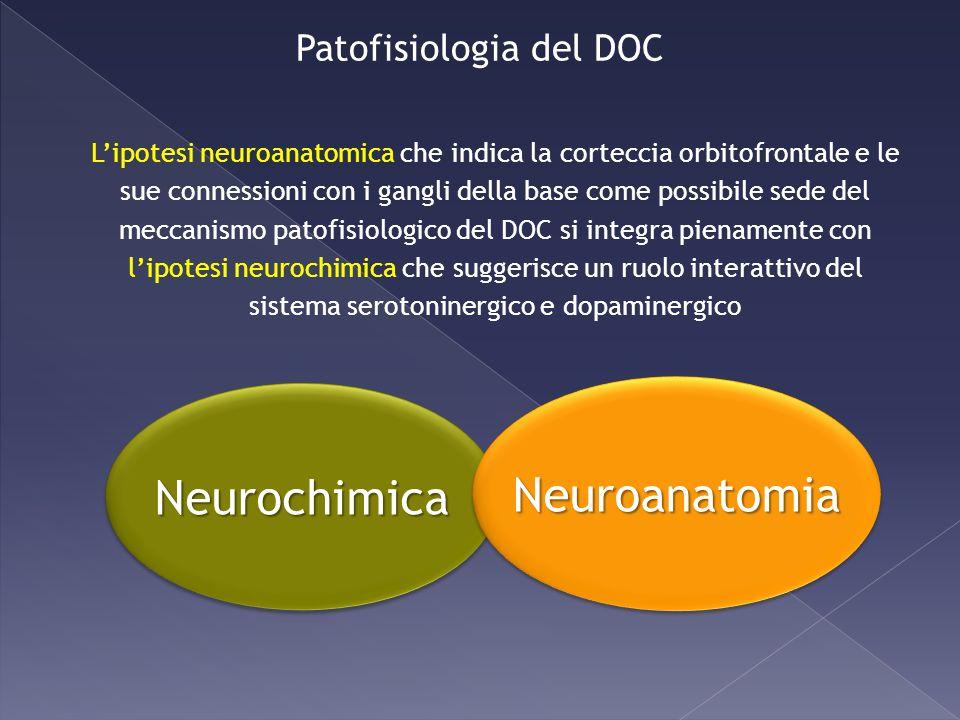 NeurochimicaNeurochimica NeuroanatomiaNeuroanatomia Patofisiologia del DOC Lipotesi neuroanatomica che indica la corteccia orbitofrontale e le sue con