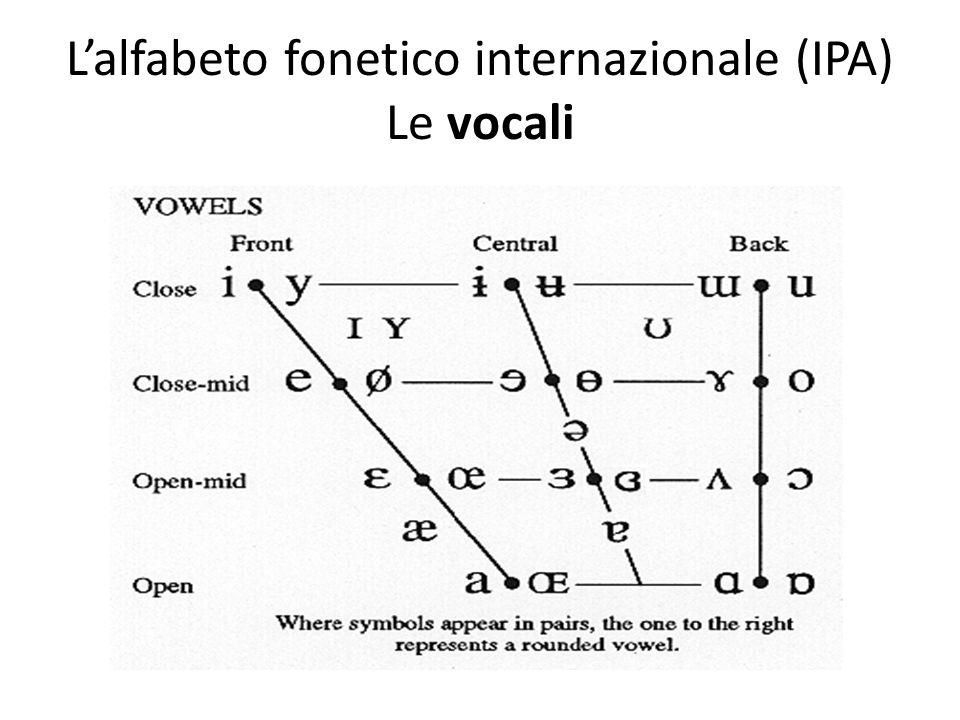 Lalfabeto fonetico internazionale (IPA) Le vocali