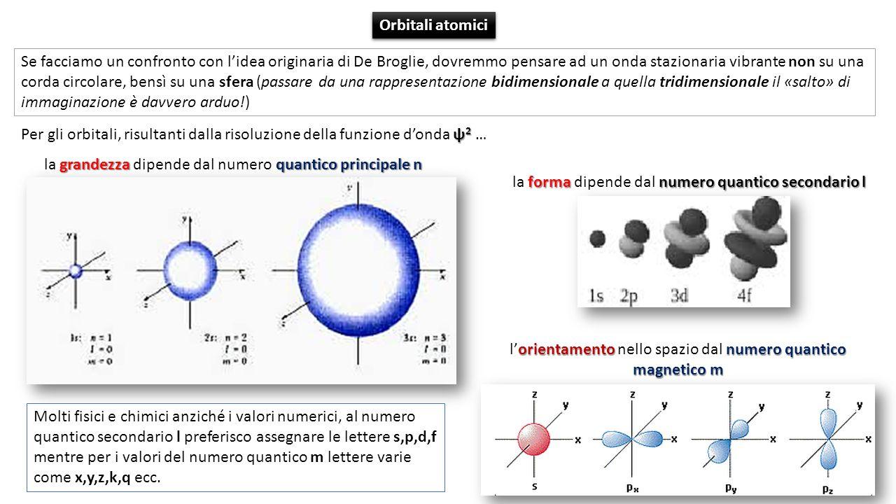 ψ 2 Per gli orbitali, risultanti dalla risoluzione della funzione donda ψ 2 … Se facciamo un confronto con lidea originaria di De Broglie, dovremmo pensare ad un onda stazionaria vibrante non su una corda circolare, bensì su una sfera (passare da una rappresentazione bidimensionale a quella tridimensionale il «salto» di immaginazione è davvero arduo!) grandezzaquantico principale n la grandezza dipende dal numero quantico principale n formanumero quantico secondario l la forma dipende dal numero quantico secondario l orientamentonumero quantico magnetico m lorientamento nello spazio dal numero quantico magnetico m Orbitali atomici Molti fisici e chimici anziché i valori numerici, al numero quantico secondario l preferisco assegnare le lettere s,p,d,f mentre per i valori del numero quantico m lettere varie come x,y,z,k,q ecc.